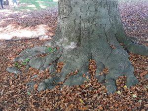 Du må ikke nødvendigvis gå langt til skogs for å føle skogens ro