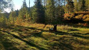 Den fineste sommeren – simple living i skogen